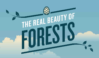 Forest Infographic   National Forest Foundation (1)